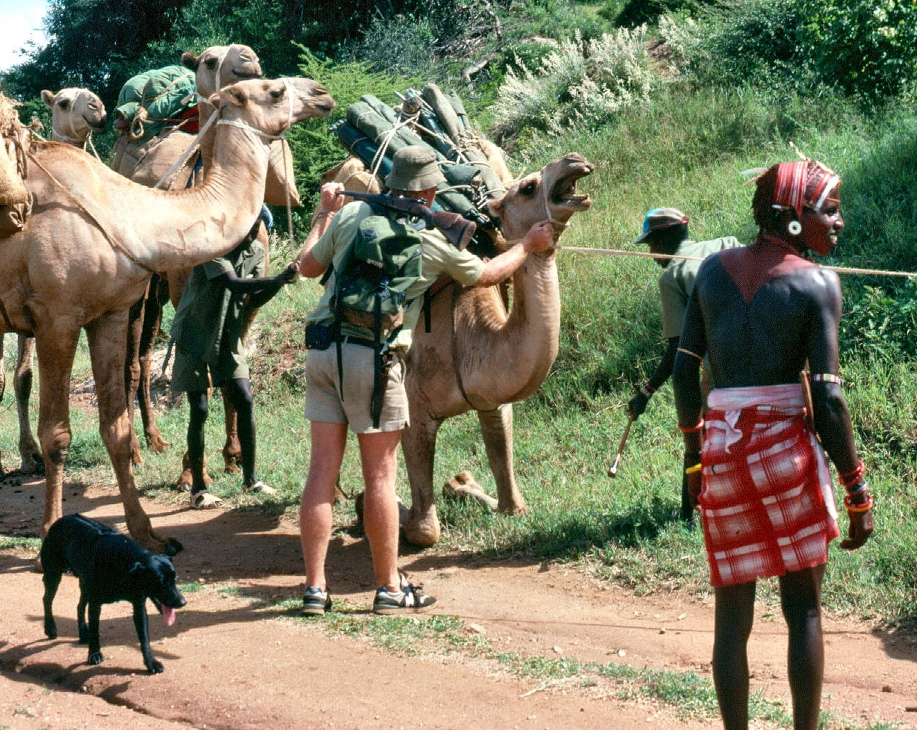 camel safari 4